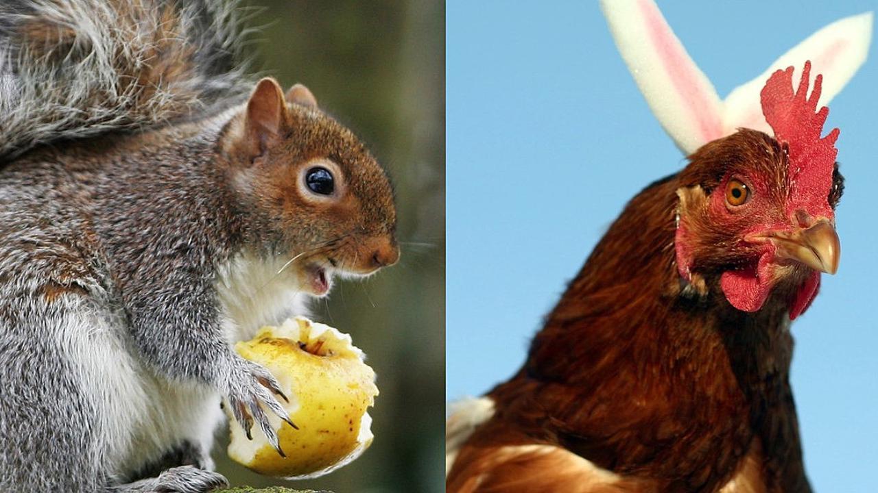 Aggressive squirrel attacks plague Queens neighborhood
