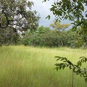 Côte d'Ivoire : le parc national de la Comoé, un magnifique joyau naturel