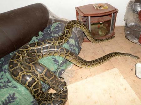 Scary: Gogo turns herself into a huge snake after being arrested