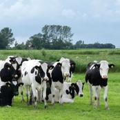 Plan and Manage your Dairy Farm for Profitability