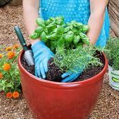 Here is How You Can Grow Potted Plants Without Drainage Holes