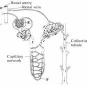 The Format Of KCSE Paper 2 Biology Questions, That A Candidate Should Know - Opinion