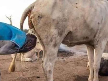 Wonders Will Never End! Meet Mundari Tribe Of South Sudan Whose Men Bath Using Cow Urine (Photos)