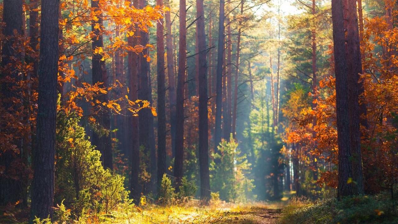 """Mehr Besucher im Wald schaden Fauna: Wildtiere im """"Corona-Stress"""" - Bretten"""