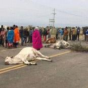 Protests Along Maai Mahiu Highway After A Careless Truck Driver Hits Cows And Flees the Scene
