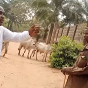 A Fulani man tells Igbo man why they will keep rearing cows in Eastern states (Video)