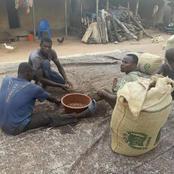 Cacao ivoirien / L'école ivoirienne paye le prix de sa mévente dans certaines localités du pays