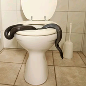 What Types of Animals Can Swim Into Your Toilet, and How to Stop It From Happening