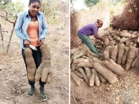 Tell them to remain in the North with their Yam and Cow, man shared tubers of yam harvested in the South