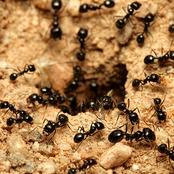 اصنع ثروة من حشرات منزلك.. النملة بـ3400 جنيه والبرص بــ10 دولار.. والحسابة بتحسب