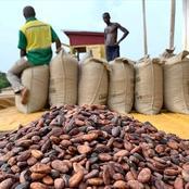 Les producteurs du cacao de Côte d'Ivoire en difficultés
