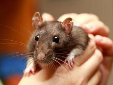OPINION: 4 Reasons Why 2020 Is The Year of The Rat