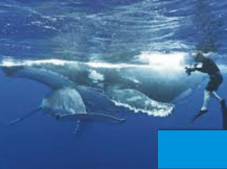 Three women injured swimming with giant whales in Australian water in space of a week