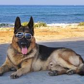 كلب ثروته 375 مليون دولار ودجاجة تمتلك 15 مليون دولار.. اغني حيوانات في العالم