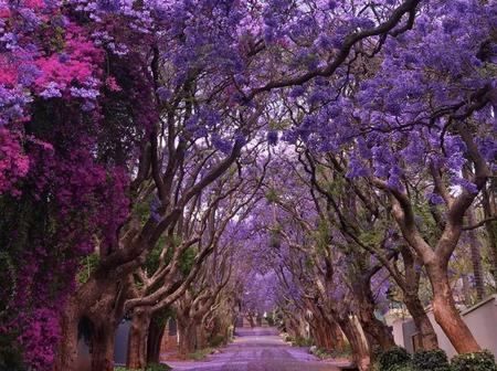 PICTURES: Some Of The World's Most Gorgeous Trees