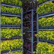 Vertical Gardening is Economically Friendly