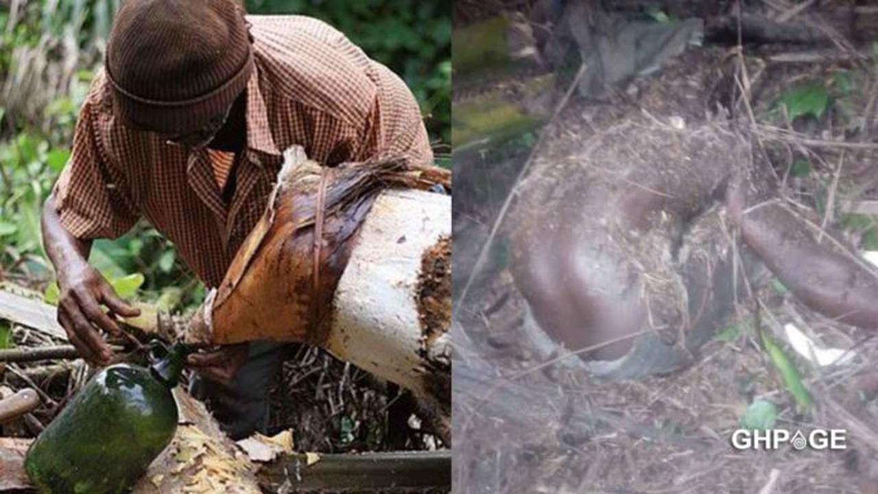 The Missing Palm Wine Tapper In Central Region Found Dead With A Missing Head