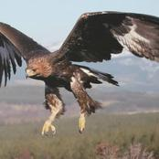 Here Are The Top 10 Fastest Flying Birds In The World