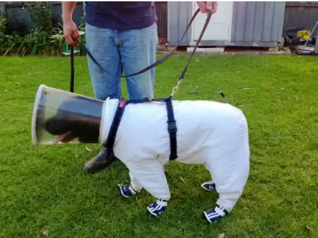 Brave Dog is Specially Trained to do One of the most Important Jobs in the World