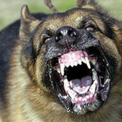 What To Do When A Dog Is Charging At You