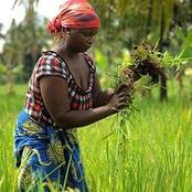 Ksh. 57.5 Million Support Towards Women in the Climate Smart Agriculture Project