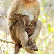 5 Very Funny Facts About Monkeys You May Not Know