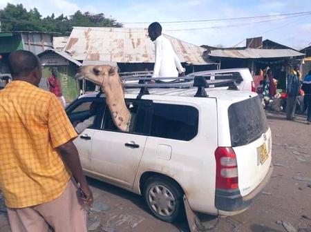 Kenyans Puzzled by Photo of Camel Inside a Probox