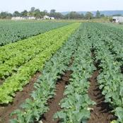 Short seasoned crops that can make you earn some good money this year
