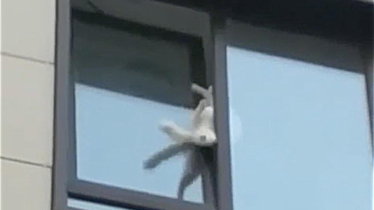 Moment passersby borrow scaffolding to rescue cat dangling out of a half-open apartment window