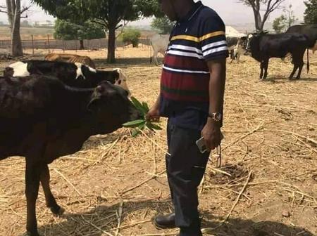 Former Speaker, Yakubu Dogara, was sighted feeding cows in his farm [Photos]