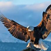 Four Leadership Skills To Learn From The Eagle