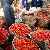 It Used To Be N800 But N150 Now - Man Laments Over Poor Tomatoes Sales In The North