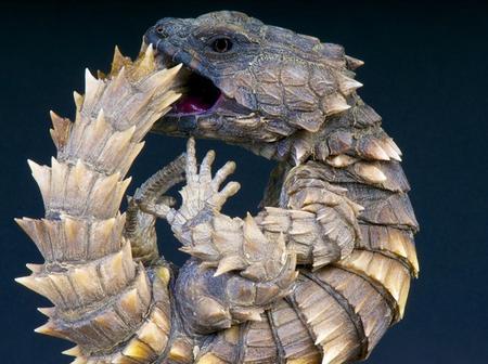 10 Strange creatures Around The World