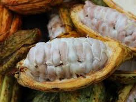 Try using cocoa beans for these reasons