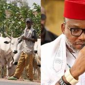 If Fulani Herders Do Not Obey Ban On Open Grazing In South, This What Southerners Should Do - Kanu