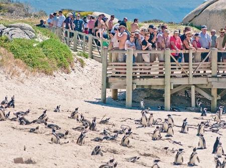 See photos of the beautiful beach that has penguins
