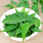 Check Out How To Use Neem Tree Leaves To Cure Your Itching Skin