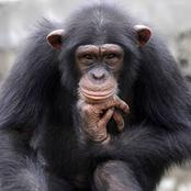 Opinion: Did you know that HIV disease Came From Monkeys