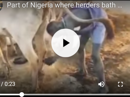 Watch Video: Part Of Nigeria Where Herders Bath With Cow Urine