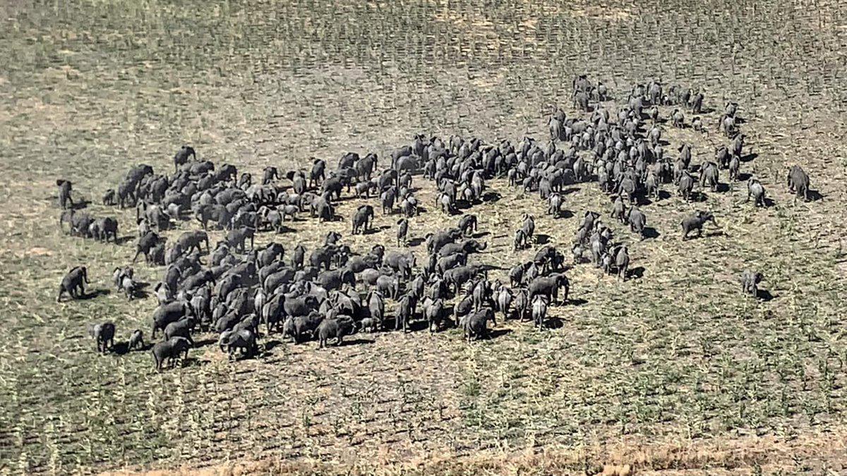 250 Elephants Sighted In Boko Haram's Battlefield