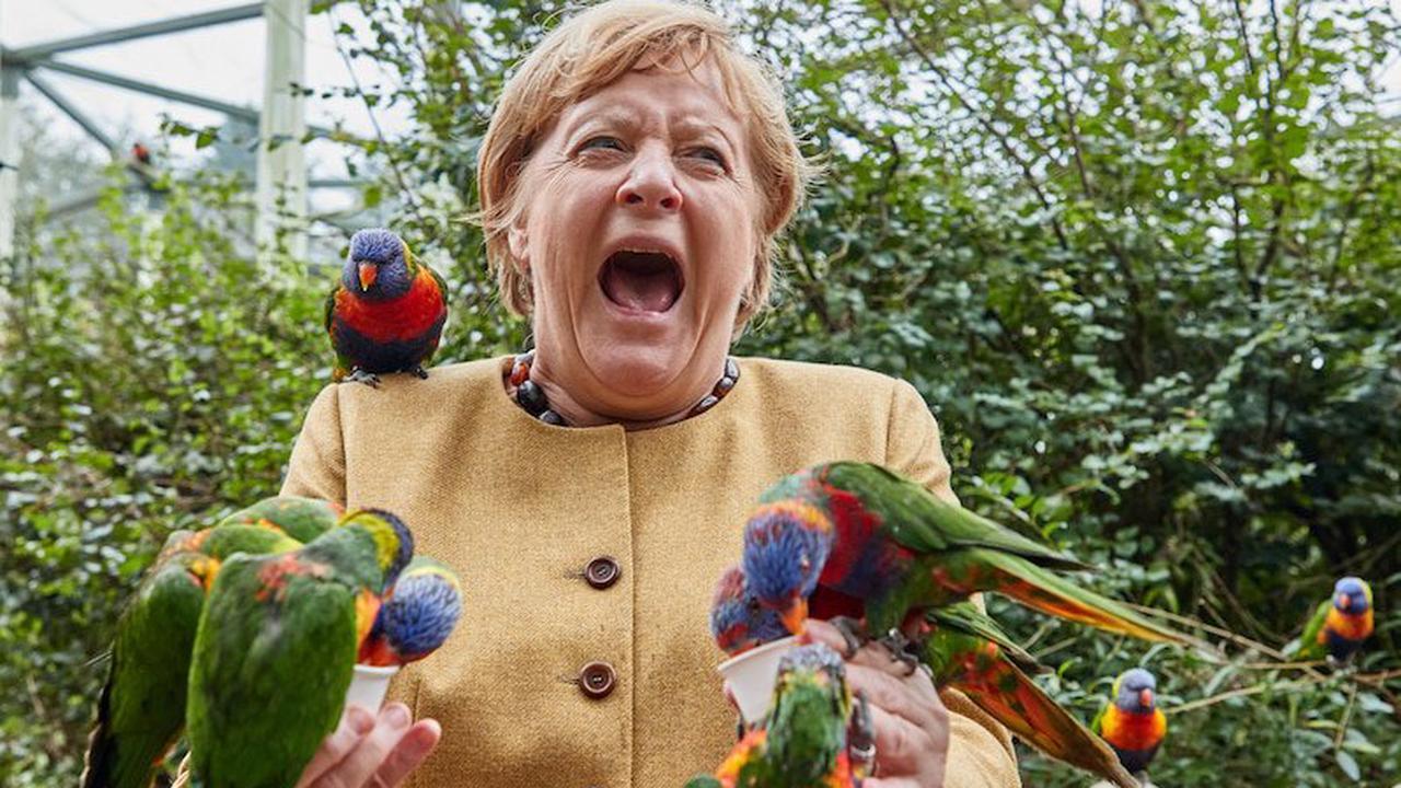 """Merkels Besuch im Vogelpark: Nur beim Uhu sagt sie """"Ne, ne"""""""