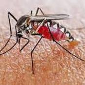 What you should know about malaria.