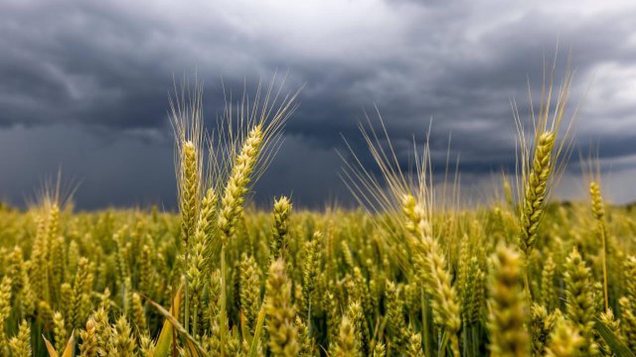 Wetter in NRW: Gewitter und Starkregen – HIER soll es diese Woche ordentlich krachen