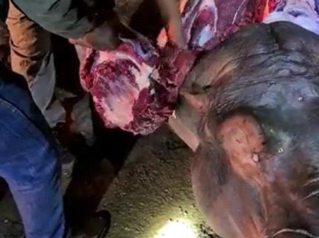 Hippo Slaughtered in Fourways (opinion)