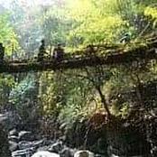 Au nord-est de l'Inde, certains ponts sont vivants