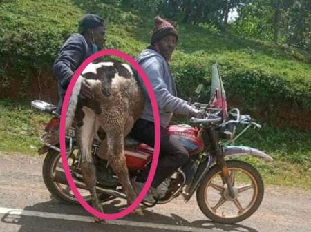 A Motorbike Spotted Carrying A