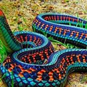 Photos:Deadliest Snakes In The World.