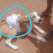 See What Was Spotted on the Back of a Dog That Got Several Reactions Online