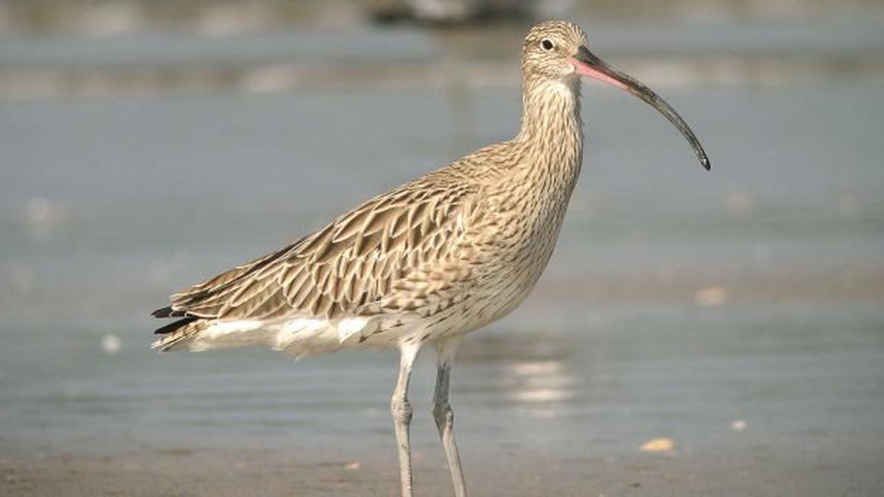 Cette année encore, aidez-nous à empêcher la chasse d'oiseaux en danger