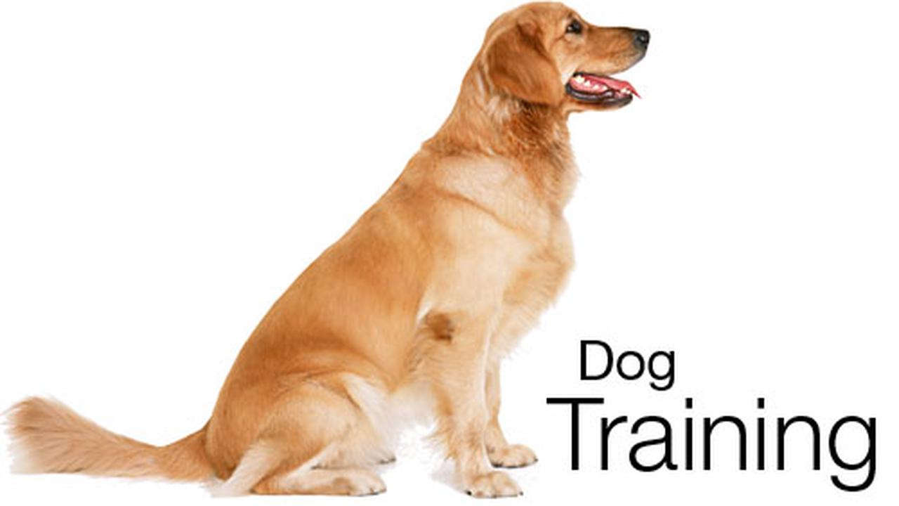 Dog Obedience class at PC RecPlex